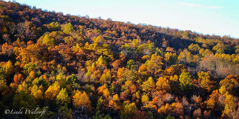 looking down on autumn trees