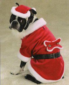 déguisement de noel pour chien