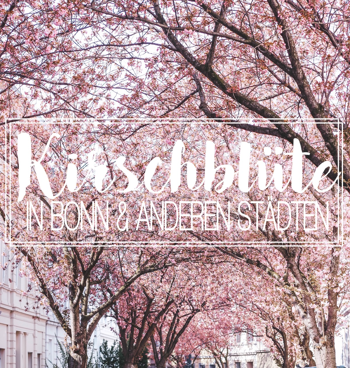 Fashionblog Stuttgart Kirschblüte Kirschblüten Bonn Outfit Beste Orte Kirschblüte Deutschland TheBlondeLion