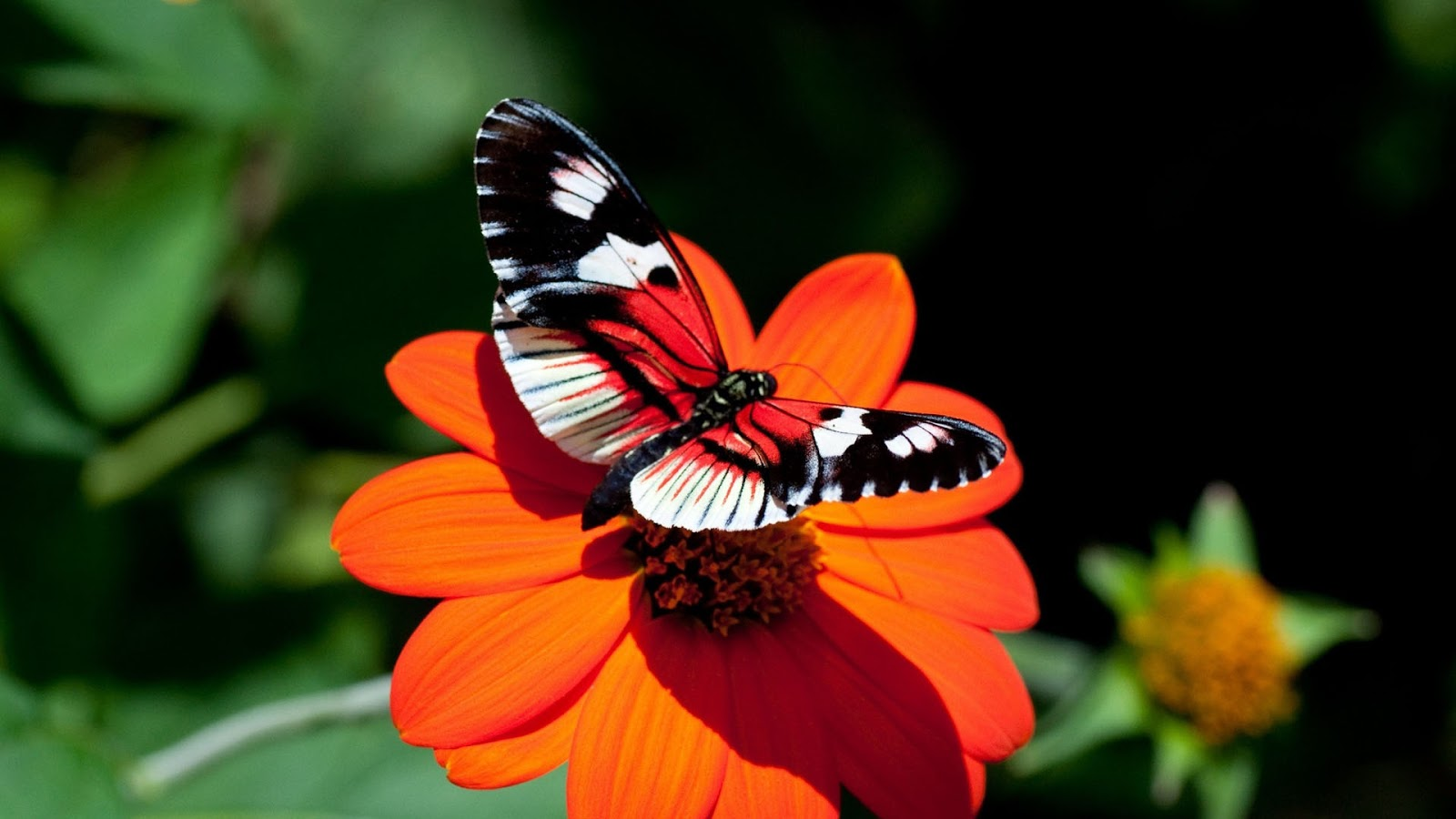 Beautiful Pictures Of Flowers And Butterflies Birds No Comments