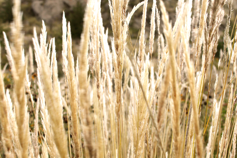 Grasses in Puno, Peru - travel & culture blog