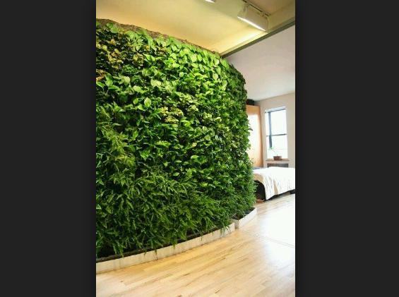 Membuat Green Wall Sebagai Fungsi Penyejuk Rumah Minimalis Anda
