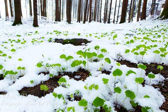 Schnee, aktuell bei 20°C in weiter Ferne - Merlischachen / Allmig (SZ) - 08.04.2012