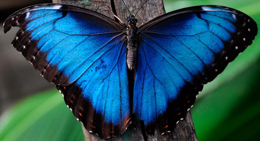 Descubre el significado de las Mariposas