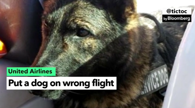 Outcry Over Dead Dog Intensifies Pressure on United CEO