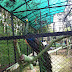 Kebun Binatang Sawahlunto