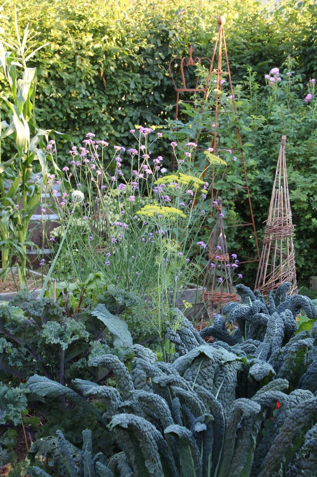 köksträdgård grönsaksland