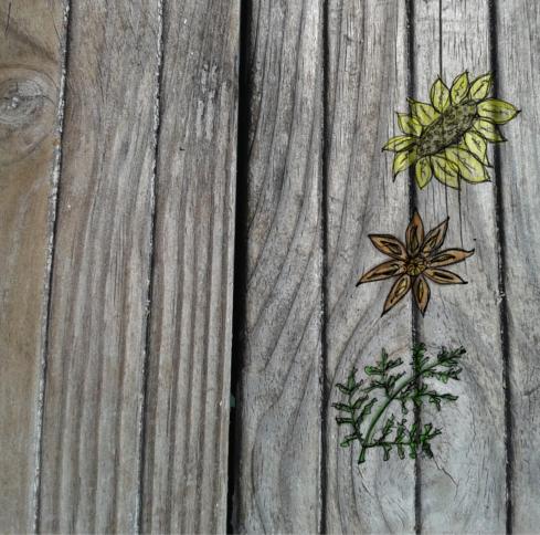 Illusztráció gyerekvershez, csiszolatlan rusztikus nyersfa parkettán gyógyteának jó gyógynövények, fűszerek képe, napraforgó, csillagánizs, holdruta.
