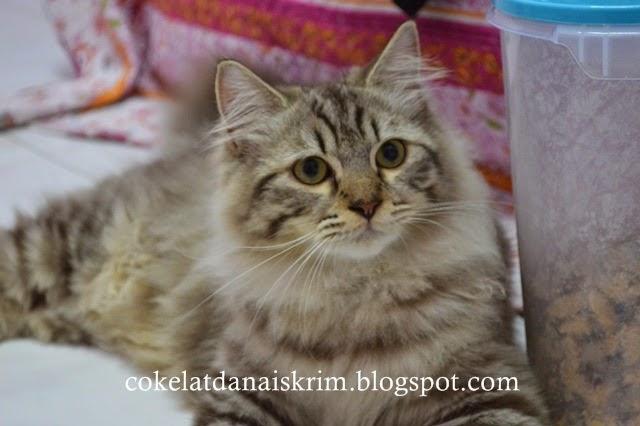 Makanan Kucing King Cat Berikut Ini Kumpulan Animasi Keren
