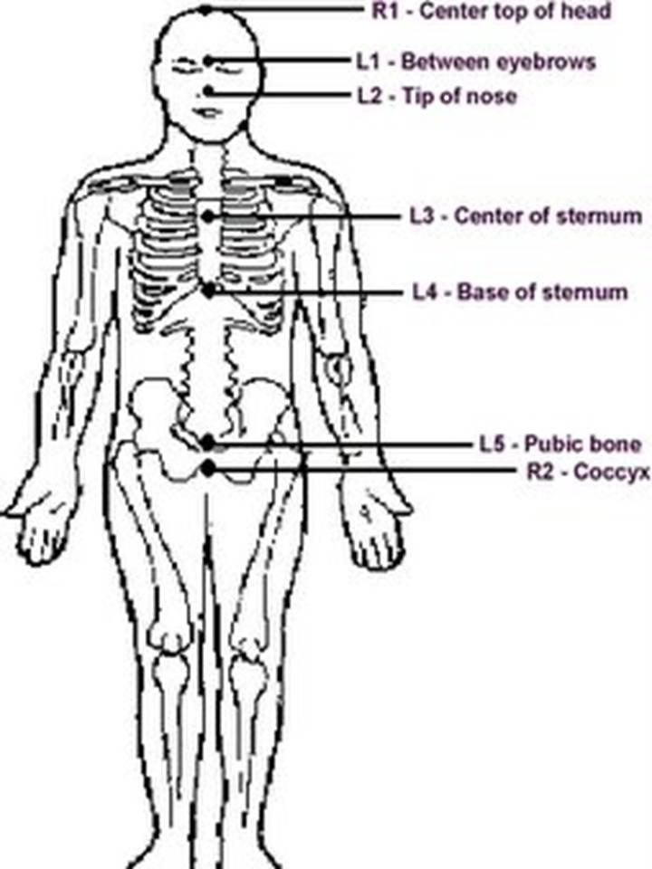 L1 L2 Spine