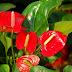 Chọn cây phong thủy giúp 12 cung hoàng đạo phát tài phát lộc trong năm mới