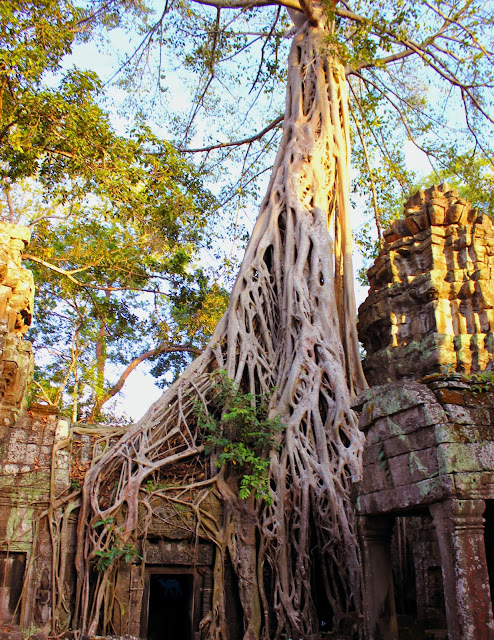 Temple de Ta Prohm - Angkor