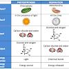 Yang Harus Diketahui Mengenai Perbedaan Fotosintesis dan Respirasi