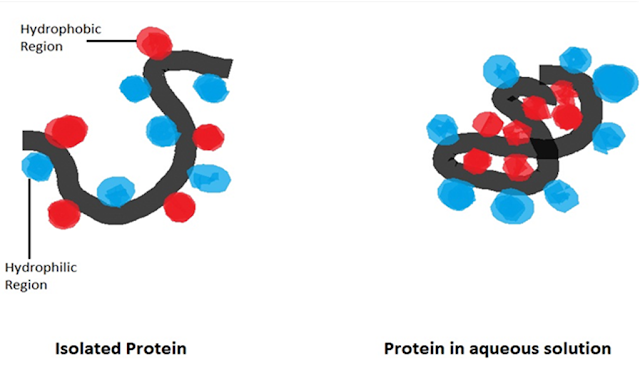 Hydrophobic bond in protein formation