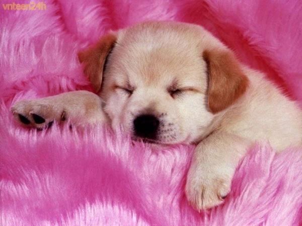Làm thế nào để đưa cún con vào giấc ngủ?