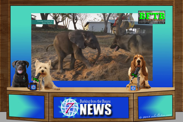 BFTB NETWoof News desk with photo of elephant and dog in background
