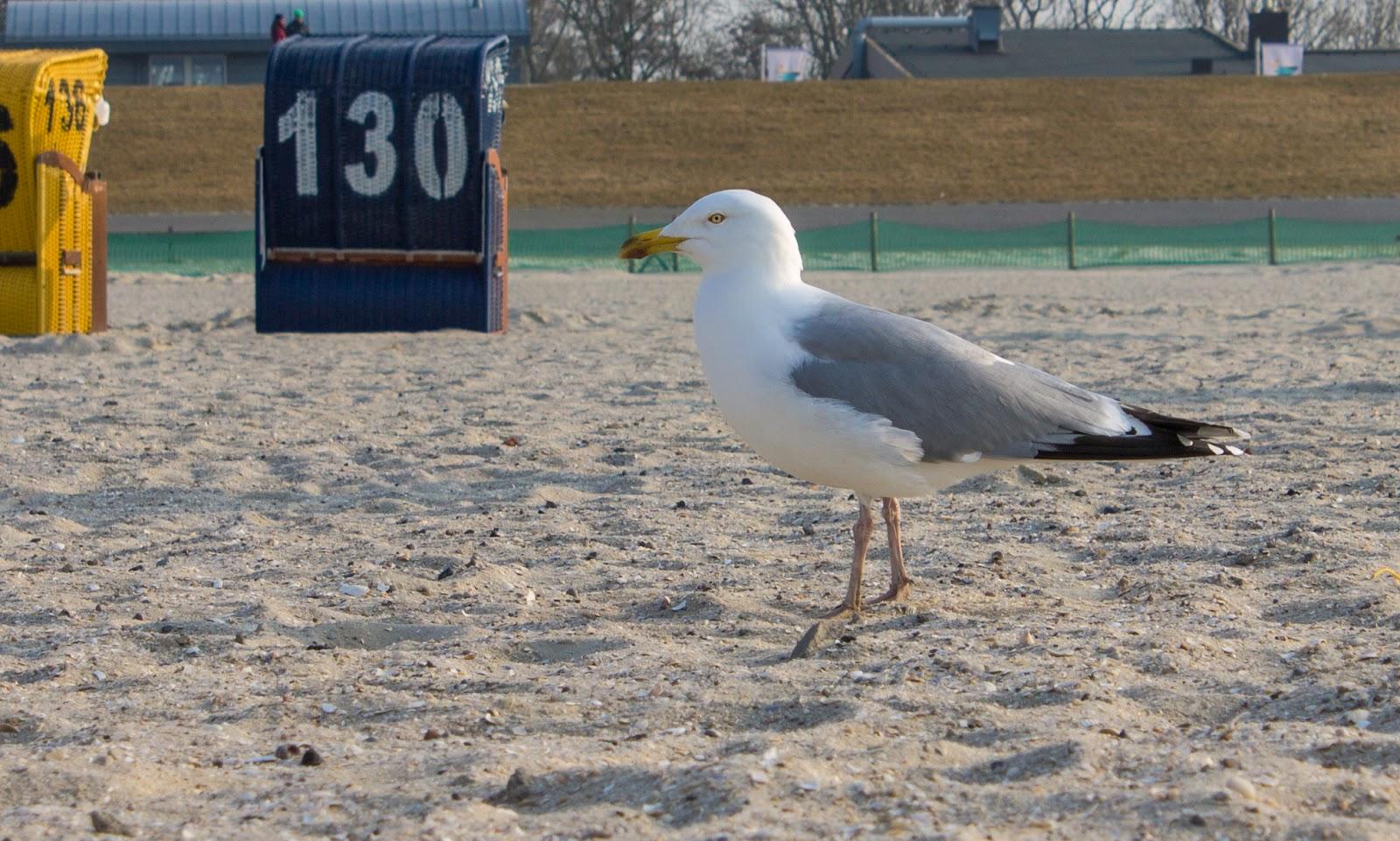 Fotografien und Schnappschüsse: Nordseevögel