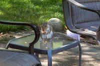 Peach and squirrel