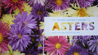 Guía sobre especies y cultivo de Aster. The plant lover's guide to asters.