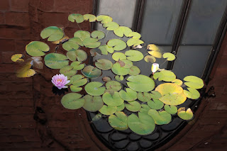 lilies floating in a pond, reflection of a chapel in the water