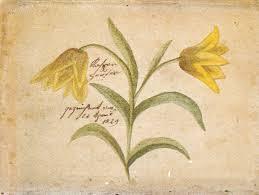 Aquarell von Kaspar Hauser 1829
