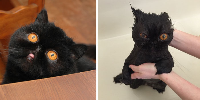 banyo_yapan_hayvanlar4