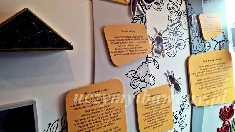 Rodzaje pszczół