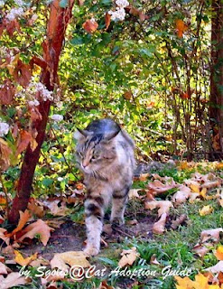 Feral Cat in the Fall Season