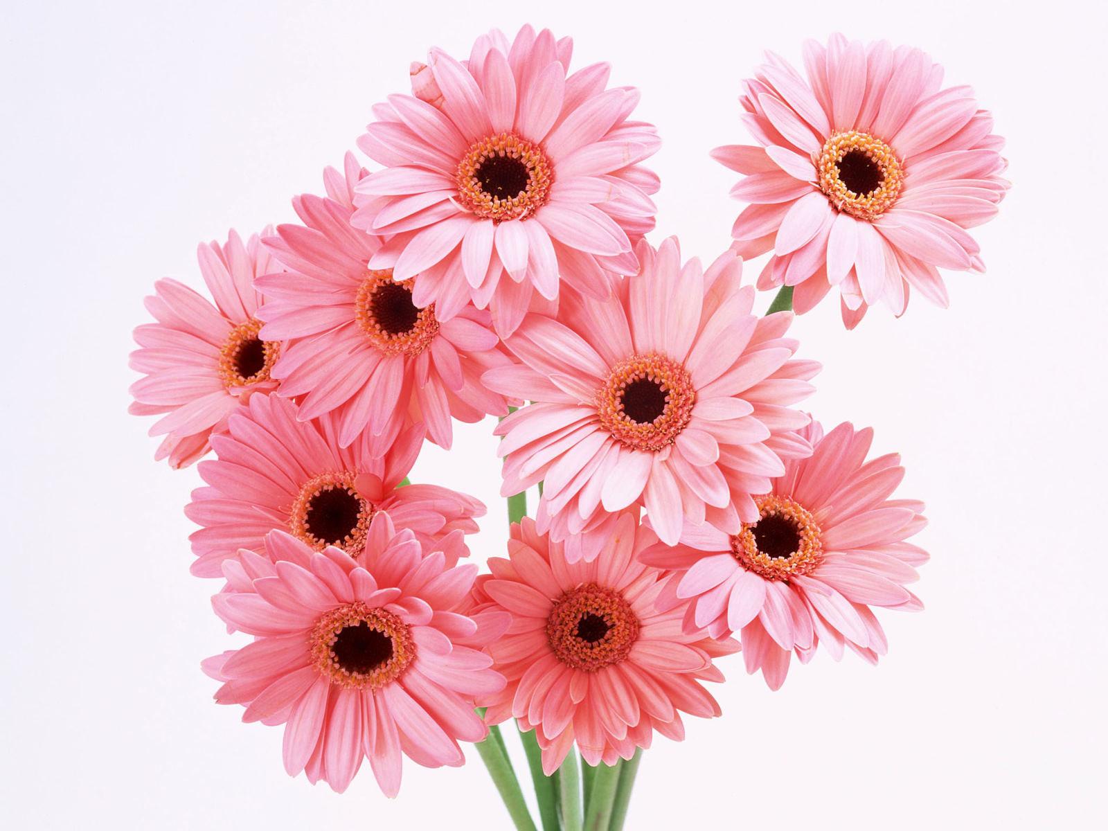 Flowers For Flower Lovers Flowers Wallpapers Hd Desktop Beautiful Back Grounds