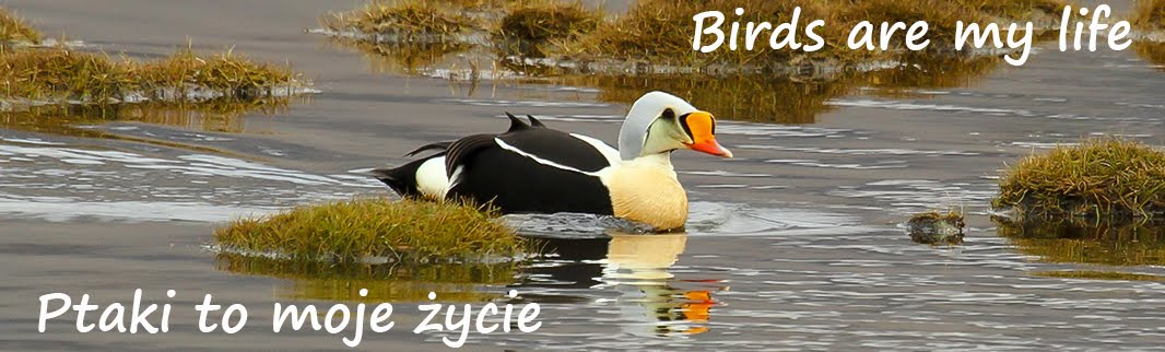 Ptaki to moje życie / Birds are my life