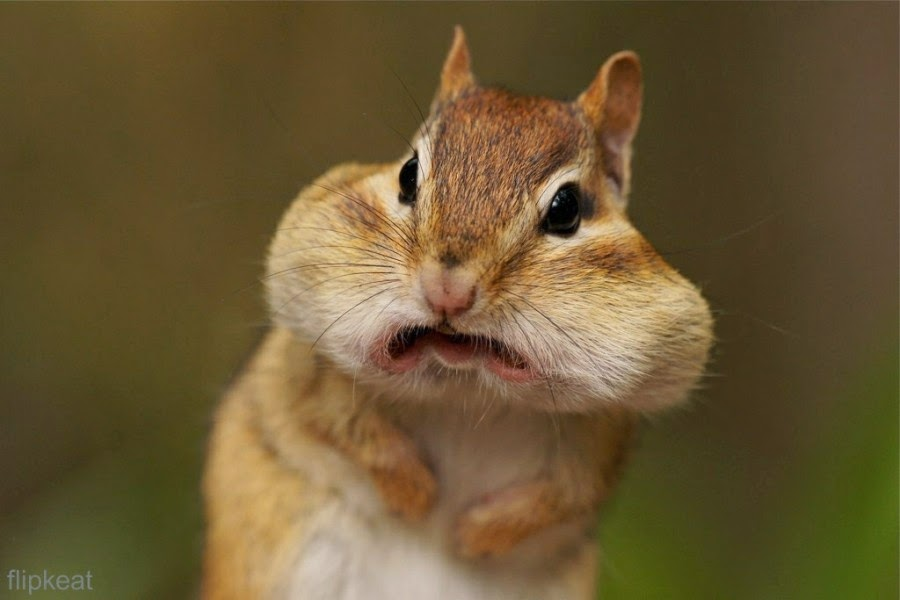 22 Hilarious Photos of Animals Making Funny Faces - Best ...