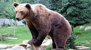 Αρκούδα επιτέθηκε σε 10χρονο αγόρι . Η κίνηση που του έσωσε τη ζωή