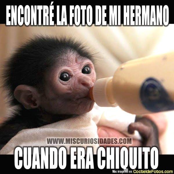 Imagenes Graciosas Chistosas Memes para reir hermano mono