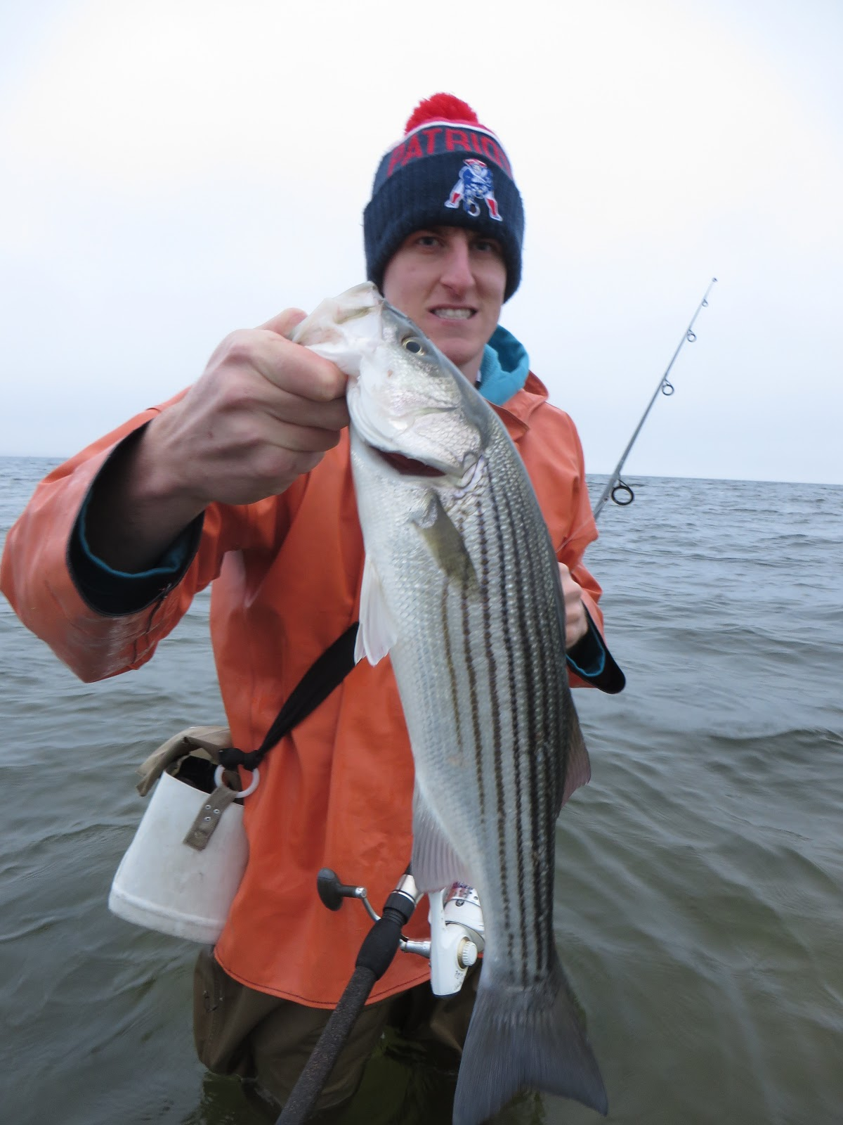 Rhode island striped bass focusing on the bay for Best striper fishing spot in ri