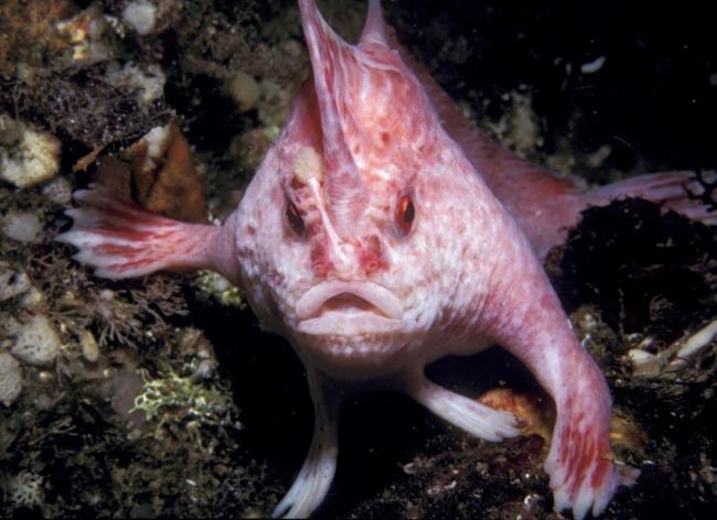 Ψάρι με χέρια