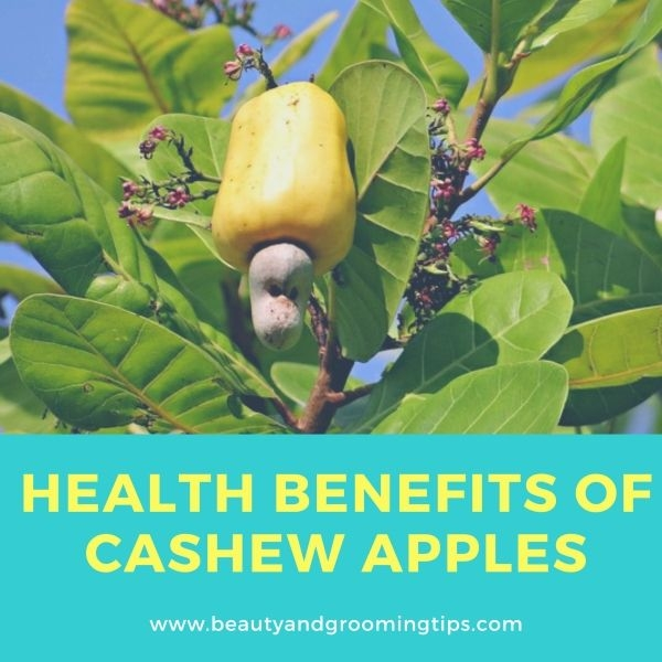 health benefits of cashew apples or cashew fruits