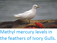http://sciencythoughts.blogspot.co.uk/2015/03/methyl-mercury-levels-in-feathers-of.html