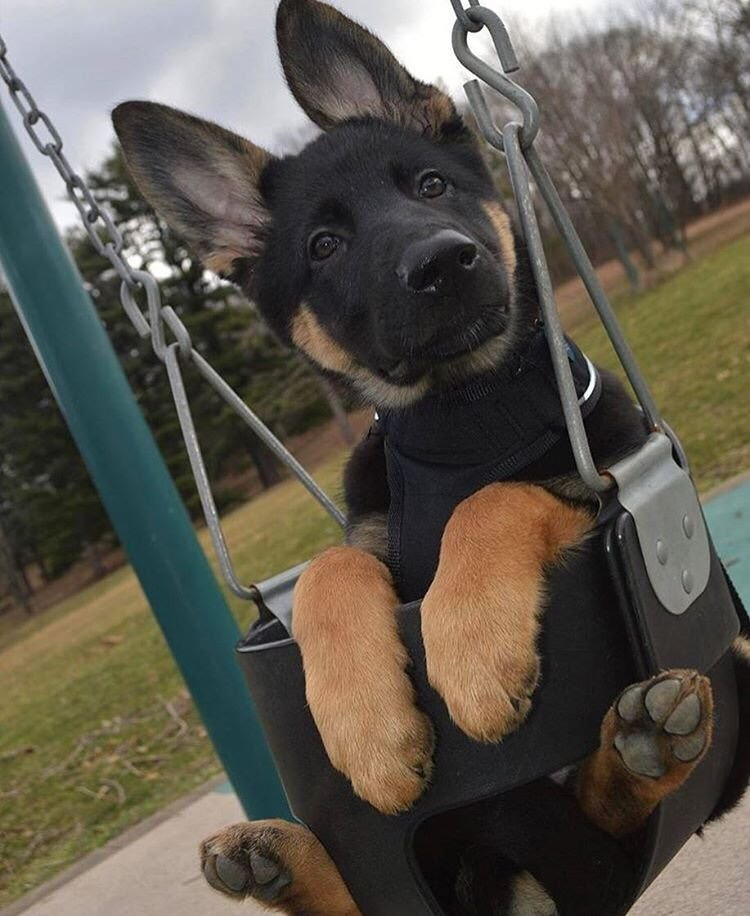 Cute dogs - part 169, cute dog images, funny dog picture