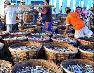 Cara Penanganan Ikan Di Darat