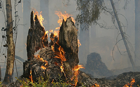 Kill and stop tree stumps from growing back using fire