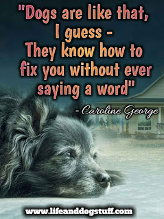 dog quotes inspirational | dog quotes with pictures