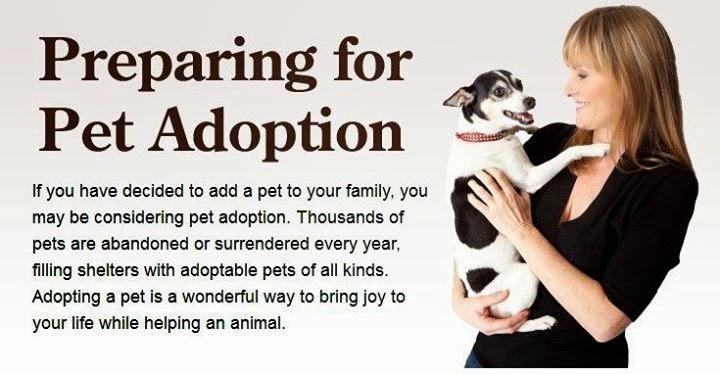 Caim Animal Rescue Network: ADOPTABLES