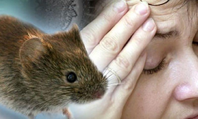 Resultado de imagen para arenavirus ratones