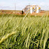 IBGE eleva projeção da safra; no Paraná, pode haver quebra