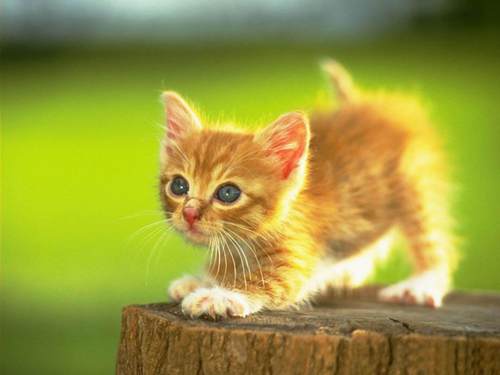 Hunting Cat Wallpapers ~ Desktop Wallpaper