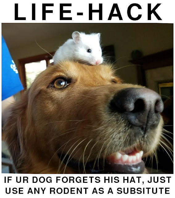 Funny dog meme of using a rodent for a hat lifehack
