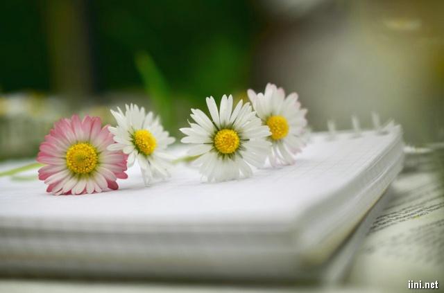 lưu bút và hoa đẹp