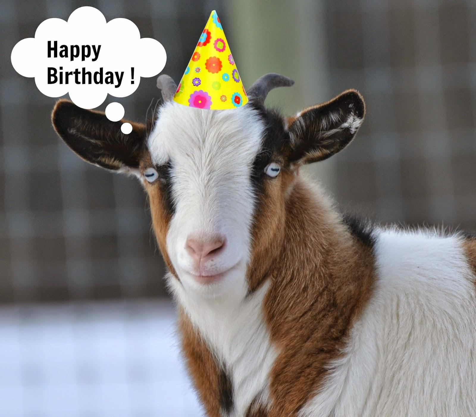 Happy birthday goat - photo#30