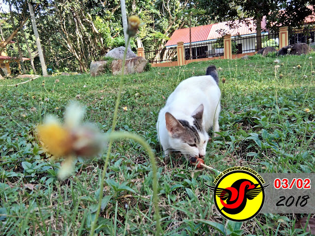 Saya Menyaksikan Kucing Menangkap Ikan - Sofinah Lamudin