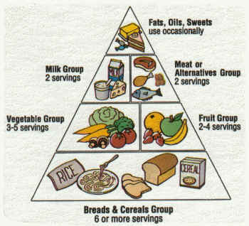 Food Pyramid And Myplate Monkey Kitchen
